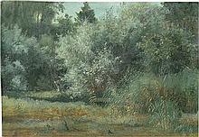 Deutsch: 19. Jh. Landschaftsstudie mit Gräsern und Bäumen
