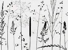 Tairraz, Pierre: Grass study