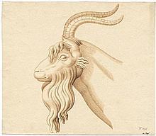 Isopi, Antonio: Kopf eines Ziegenbockes