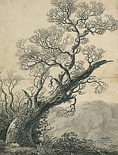 Klinsky, Johann Gottfried: Knorrige Eiche