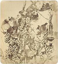 Braun, Adolphe: Vine with grapes