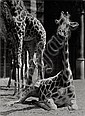 Seidenstücker, Friedrich: Selected animal images, Friedrich Seidenstucker, Click for value