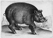 Hollar, Wenzel: Der große Eber