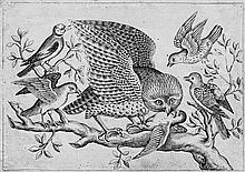 Italienisch: frühes 17. Jh. Folge mit verschiedenen Vögeln und Wasservögeln