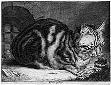 Visscher, Cornelis: Die große Katze