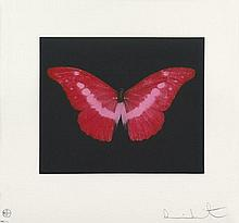 Hirst, Damien: Red Butterfly