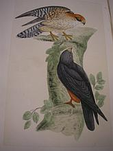 MORRIS, F.O - A History of British Birds : 4 ex. 6