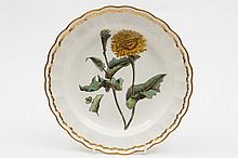 A Derby botanical plate: finely painted with 'Scor