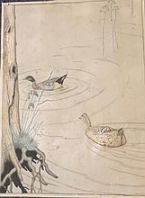 Gerard T Shaw [19/20th century]- Mallard ducks:-