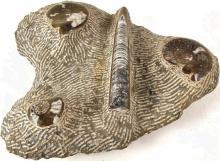 Fossilien-Gruppe