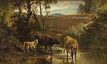 Zwei Kühe und ein Kalb an seichtem Wasser
