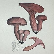 [Mushrooms] Bresadola, Iconographia Mycologica, 1927-41