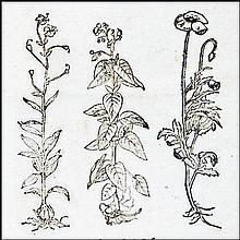 [Herbals, binding] Dorsten, Botanicon, 1540