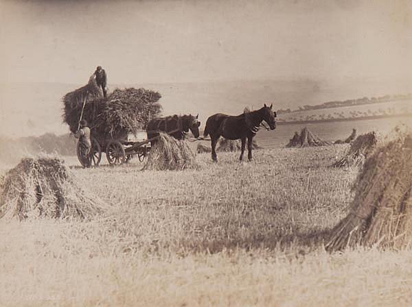 Frank Meadow Sutcliffe (1853-1941). Hay Gathering,