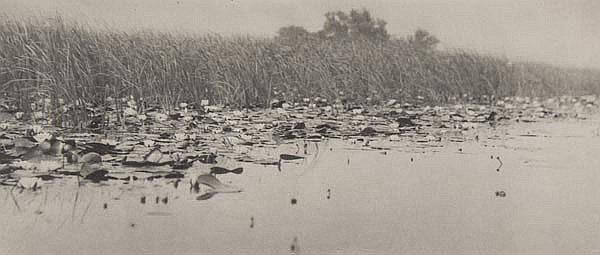 Peter Henry Emerson (1856-1936). Water Lilies,