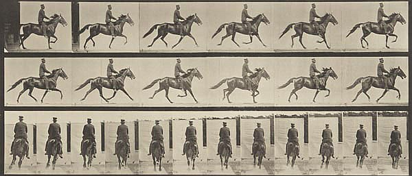 Eadweard Muybridge (1830-1904). Animal Locomotion,