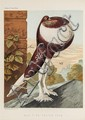 Fulton (Robert) The Illustrated Book of Pigeons,