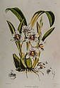 Bateman (James) A Monograph of Odontoglossum,