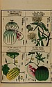Agricultural Society of Japan. Useful Plants of