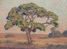 Jacob Hendrik Pierneef-(South African, 1886-1957)-'Wilde Vye Boom, Sweetwaters, Louis Trichardt'