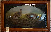 Oak Framed Victorian Aviary with convex glass displaying 2 Quail in a natural setting, overall 27-3/4