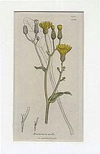 BOTANY -- COLLECTION of 50 cold. (chromo)lithogr./(wood)engr. plates of var