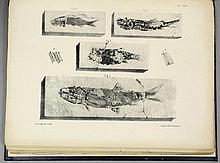 A Monograph on the Permian Fossils of England by