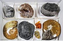 Fossils - Four trilobites from Morocco; two