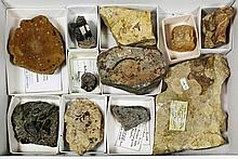 Fossils - Eleven fossils including Rhaetic fish
