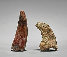 Two Animal Fossils: Tooth & Claw