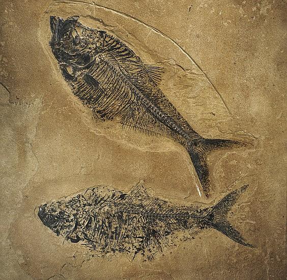 FOSSIL FISH PAIR PLAQUE