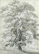 Hendrik Frans de Cort (Dutch, 1742-1810) - The great Elm in Lord Suffolk's ground, Wiltshire, pencil