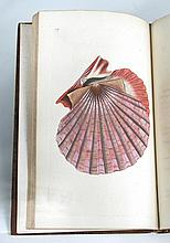 DONOVAN (Edward) The Natural History of British Shells, in 5 volumes, 1800-04, 8vo, with 180 hand coloured plates as required,...