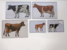 (5) DeLaval cows & calves
