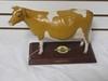 Golden Guernsey cow
