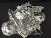 Large Sea Floor Ammonite Fossils Segment.