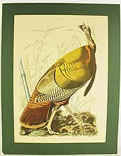 AFTER JOHN JAMES AUDUBON COLOR PRINT.  Great American cock (male).  Engraved by