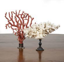 Corail blanc et corail rouge montés sur bois et mé