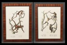 Pair of German Chromolithographs of Monkeys, c. 1900, presented in mahogany frames, H.- 12 1/2 in., W.- 8 5/8 in.