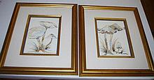 Two framed Bridgena watercolours image size18 by