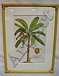 FRAMED PRINT OF A TROPICAL TREE; 11 3/4 IN X 18