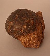Hadrosaur Dinosaur Egg, fossil of about 80 million