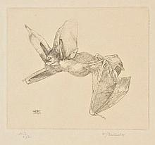 Detmold (Charles Maurice, 1883-1908 & Edward Julius, 1883-1957). Long-Eared Bat