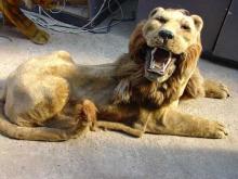 Life size Lion by Roullet-Descamps