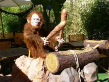 Drum playing monkey automaton