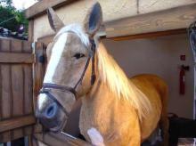 Horse life size