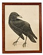 Philip Webb (1831-1915), the drawing of a raven