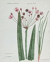 19th Century English School. - An album of botanical studies,