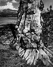 Ansel Adams (1902-1984) - Tuolumne Meadows, Plate 14, 1941