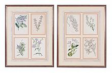 A pair of framed sets of four engravings of flowers, by S